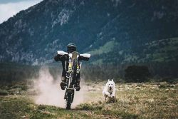 Man riding dirt bike with his dog running alongside
