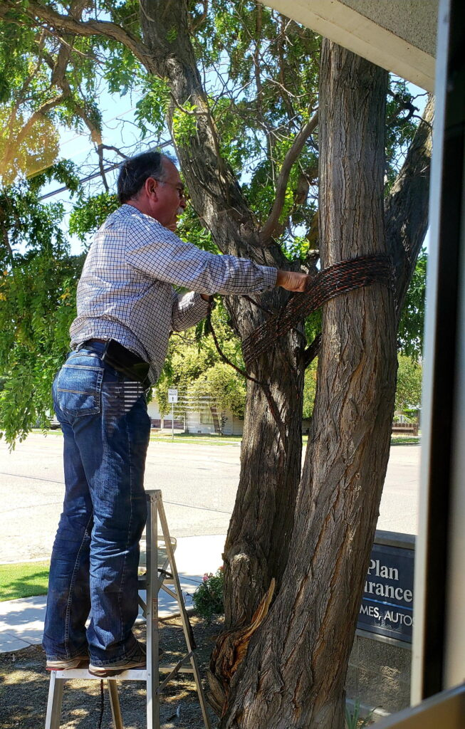 Jerry stabilizing the tree