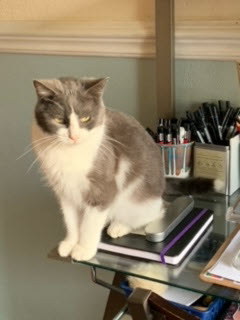 a grey and white cat sitting on some books on a desk